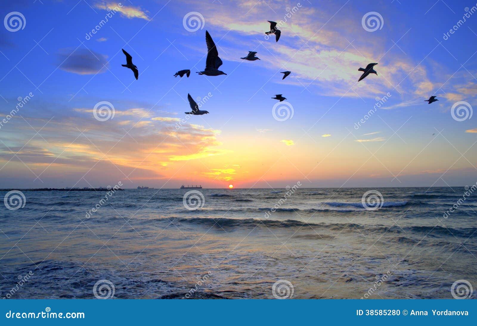 Oiseaux noirs contrastant au lever de soleil coloré