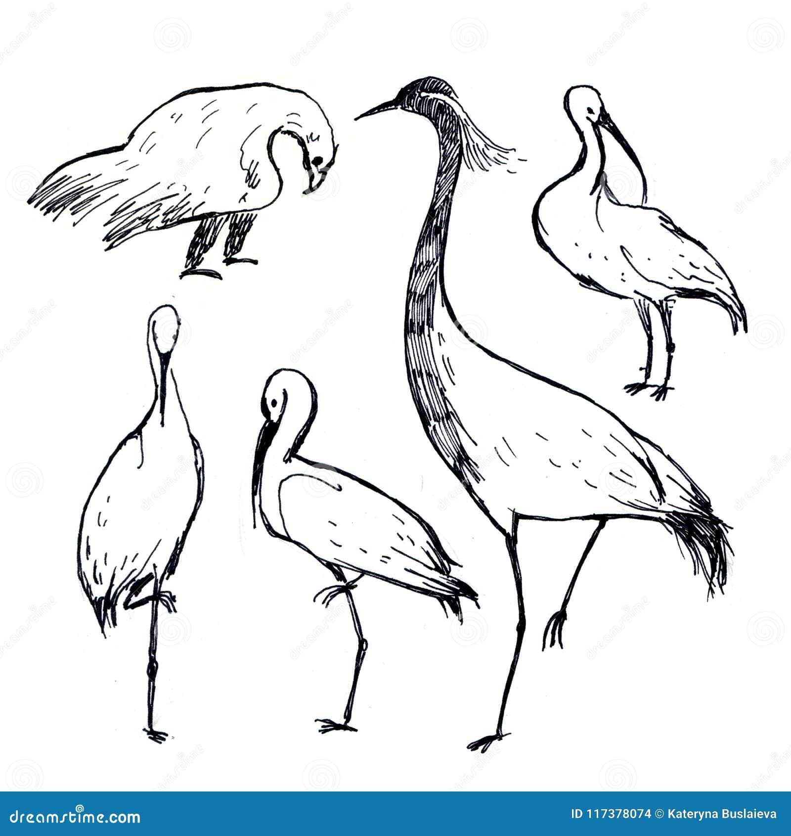 Oiseaux Noirs Et Blancs De Dessin De Stylo Disolement Sur
