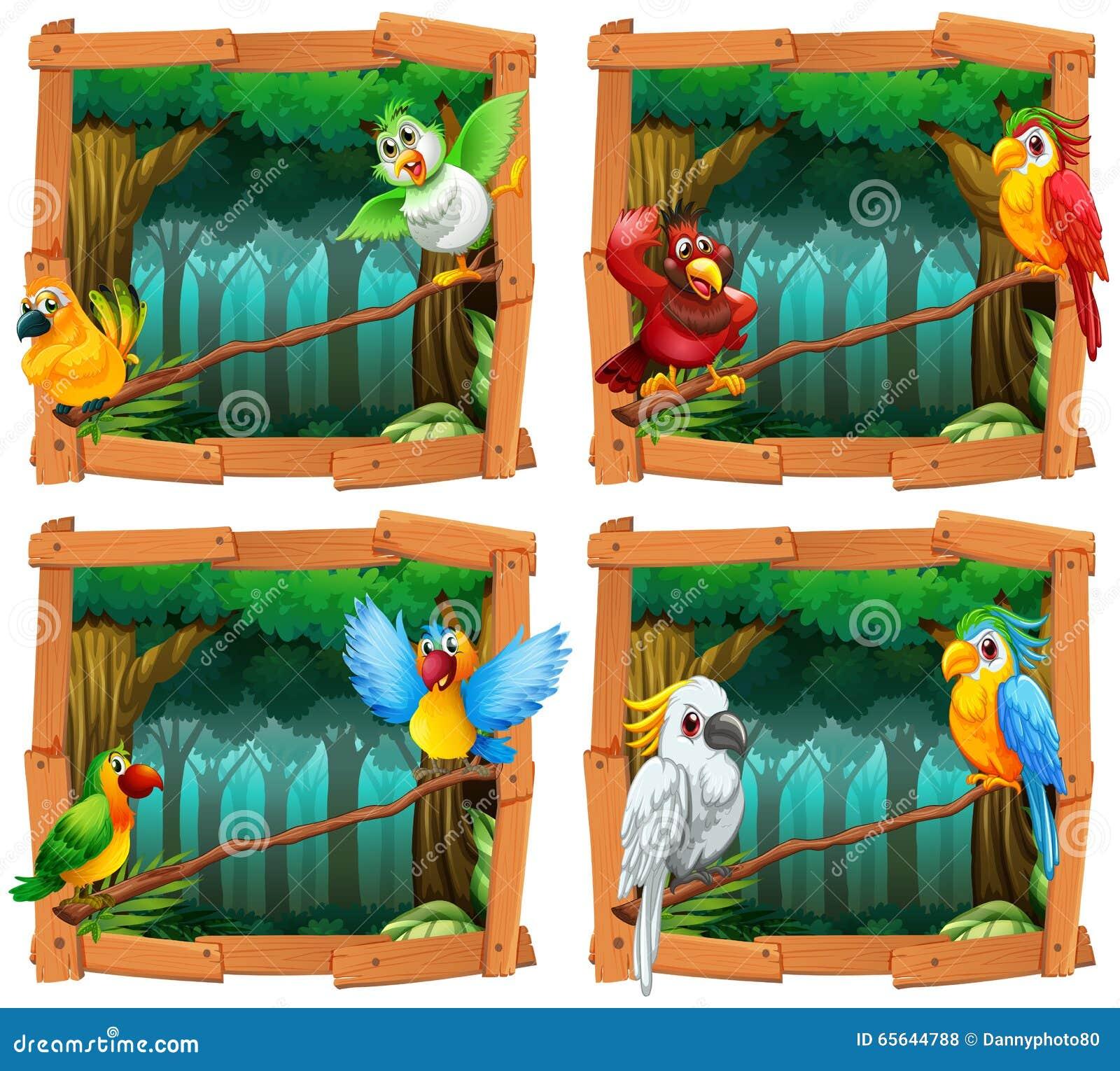 Oiseaux sauvages dans la forêt