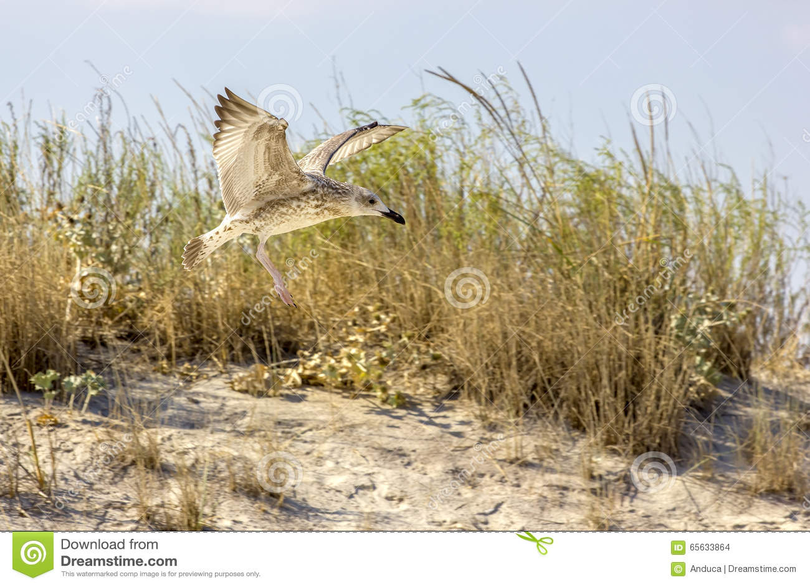 Oiseaux sauvages sur la plage roumaine