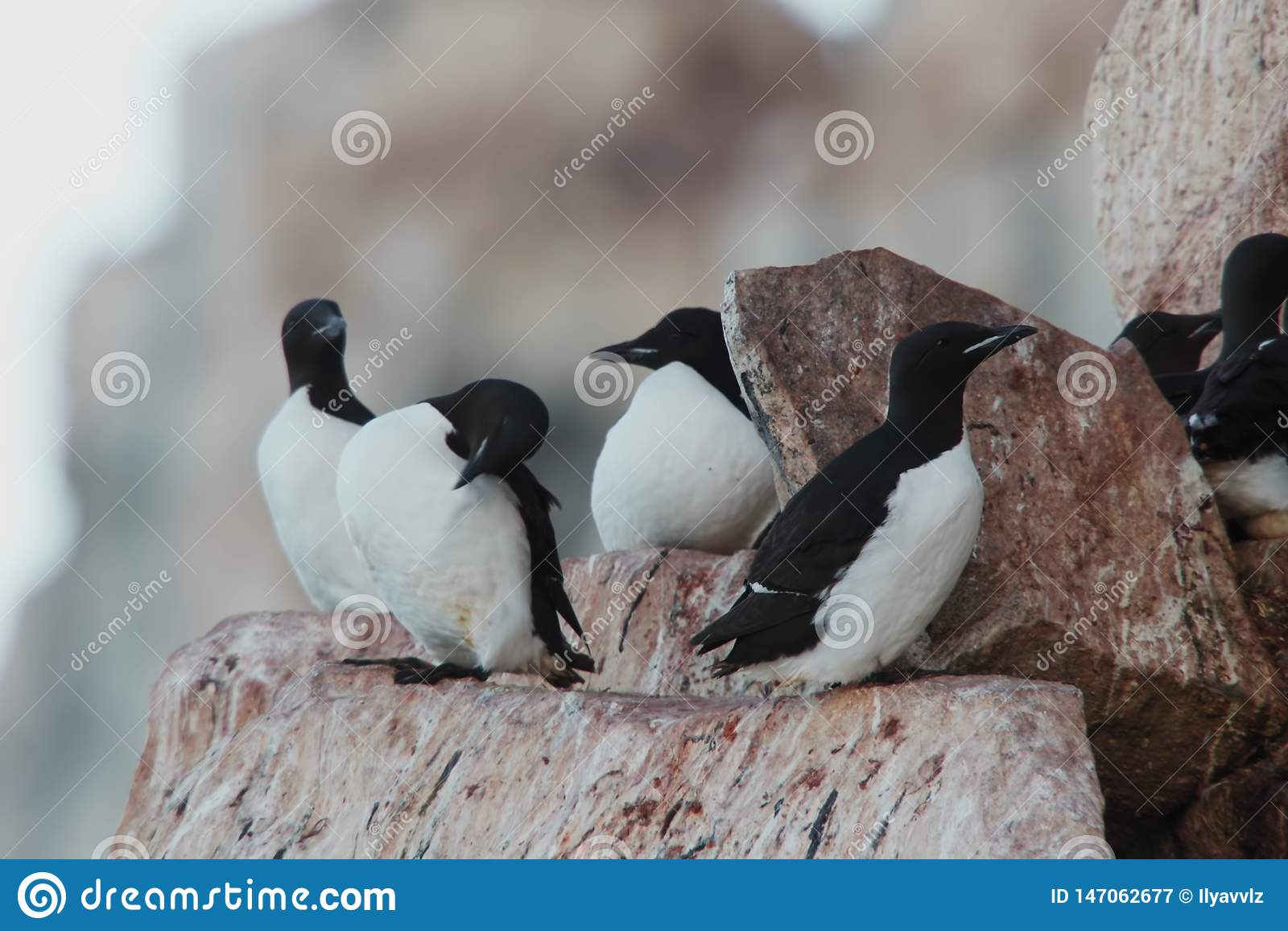 Oiseaux sur la nature de montagne