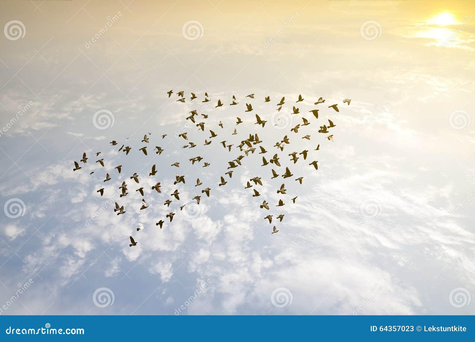 Oiseaux sur le ciel, concept de développement de croissance
