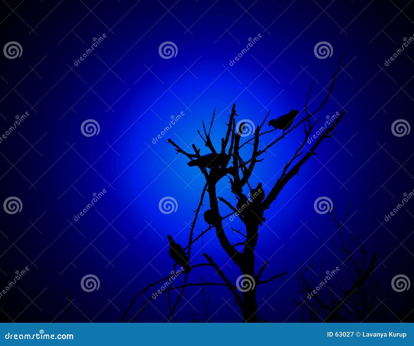 Oiseaux sur un branchement