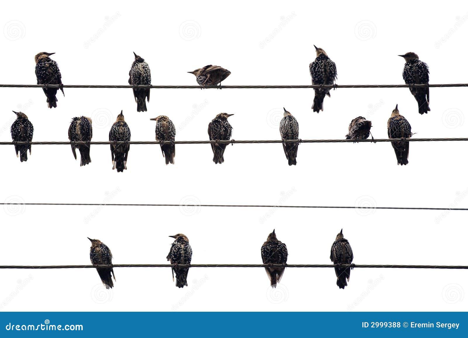 oiseaux sur un fil d 39 isolement en fonction photos libres. Black Bedroom Furniture Sets. Home Design Ideas
