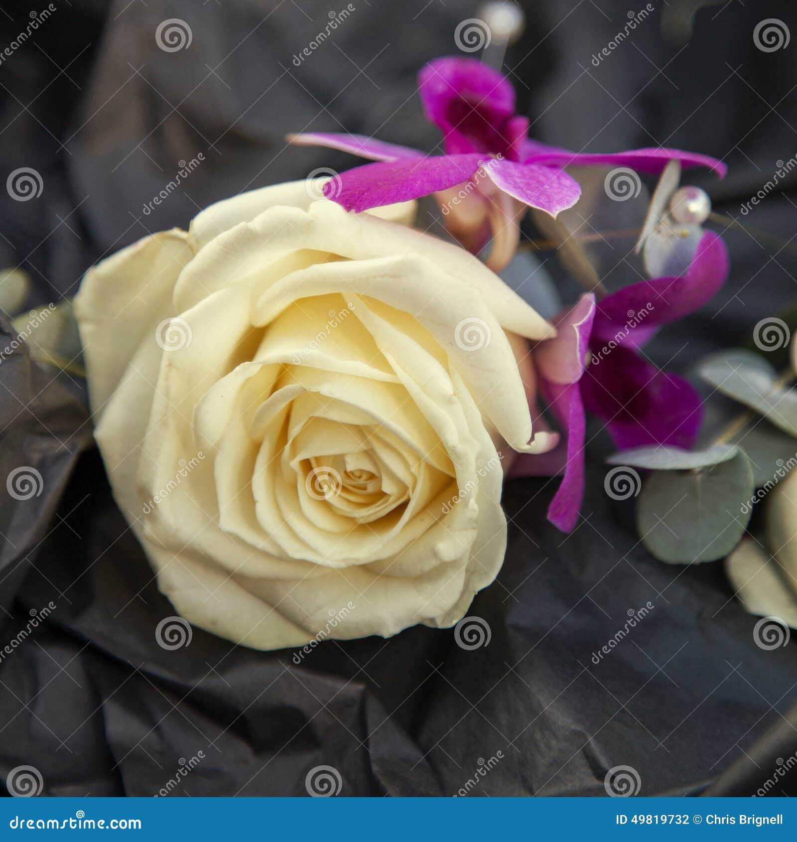 Ojal color de rosa de la boda de marfil
