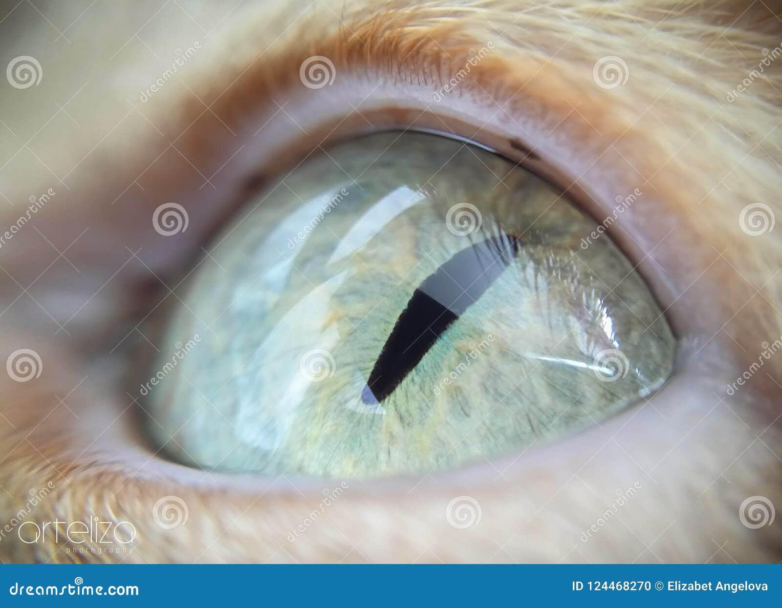 Ojo de gato verde macro