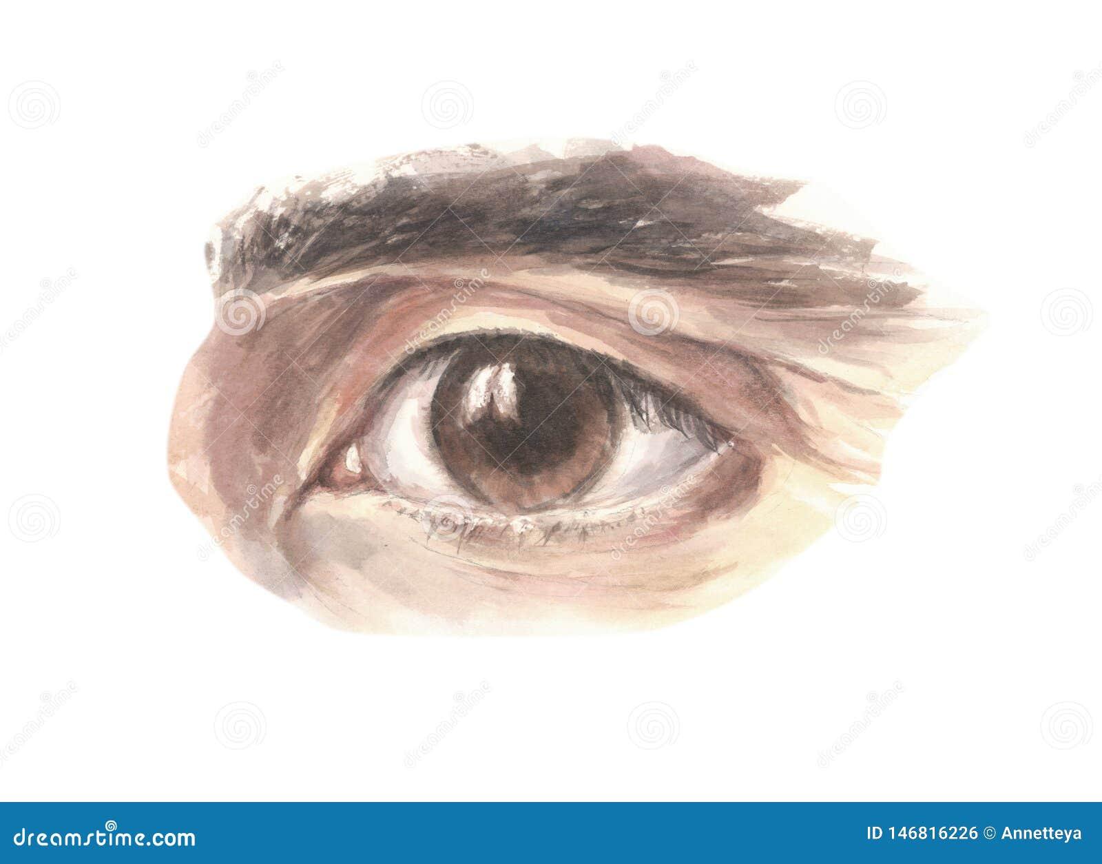Ojo marrón masculino que anticipa con confianza, ejemplo