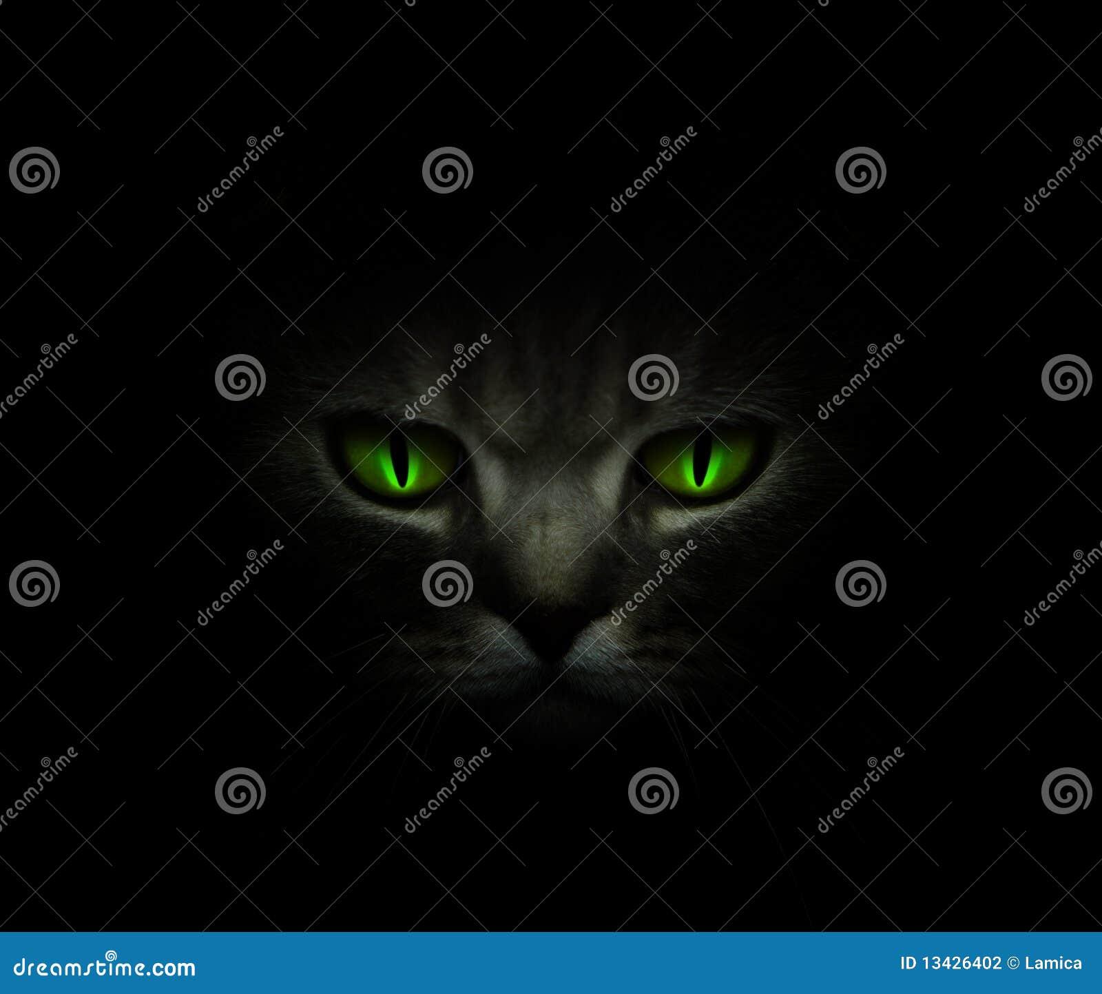 Ojos de gato verdes que brillan intensamente en la obscuridad