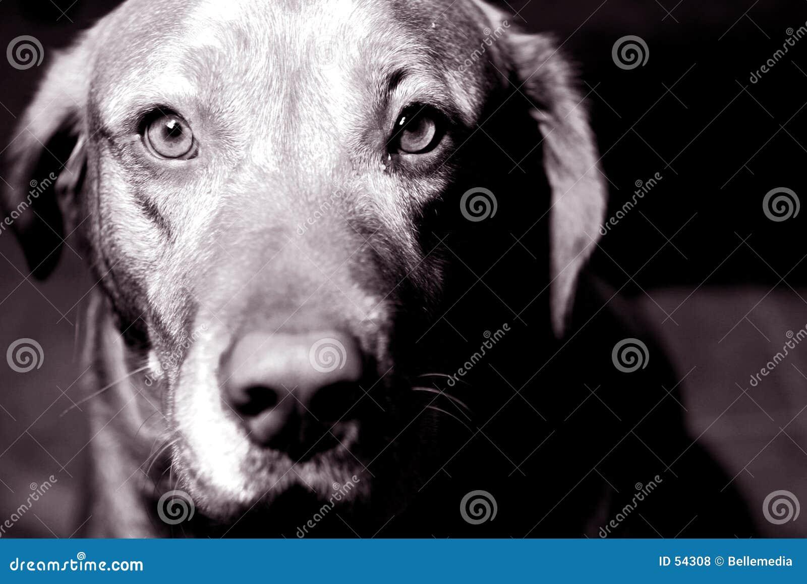 Ojos de un animal