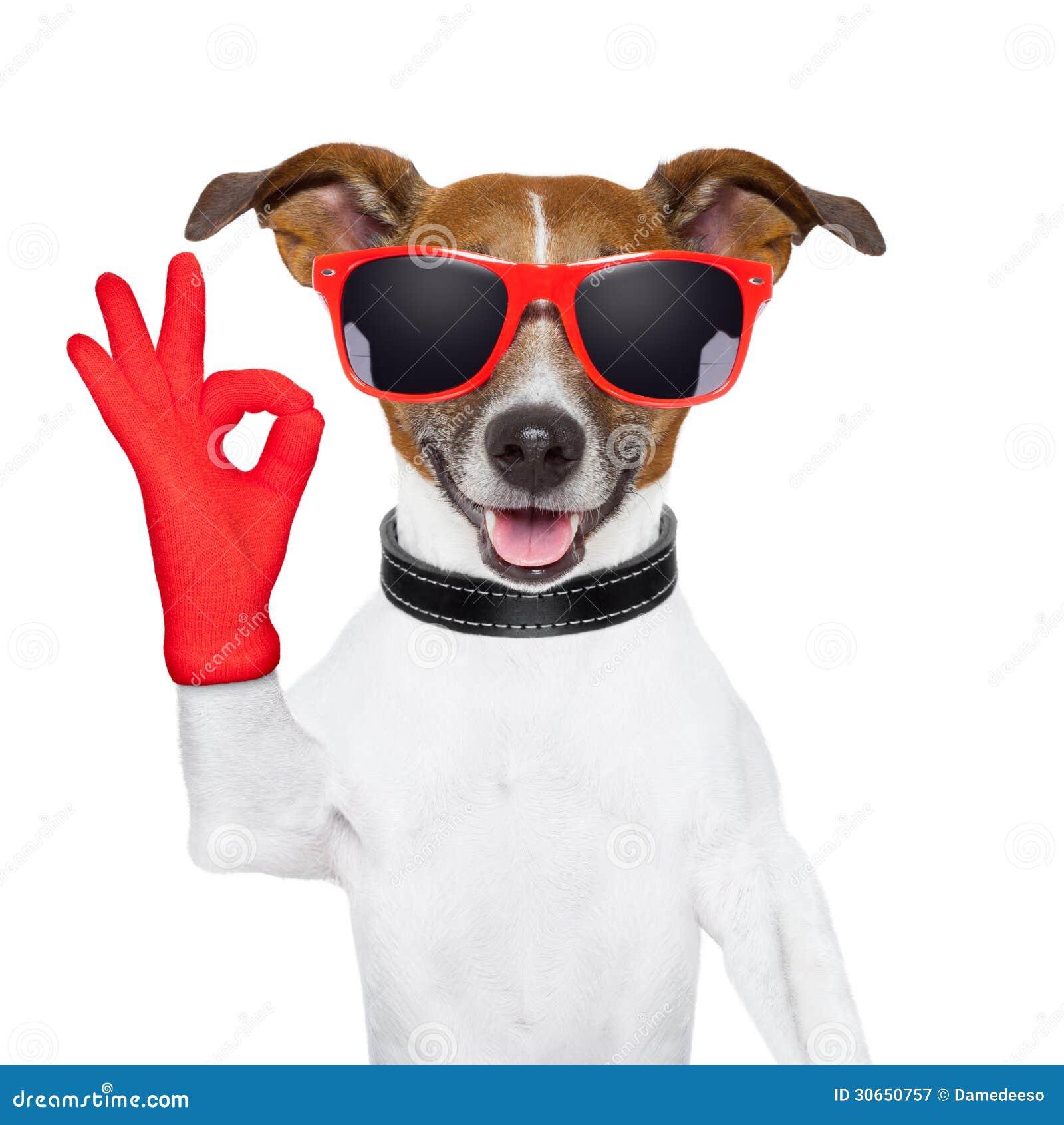 Dog Free Stock Images X