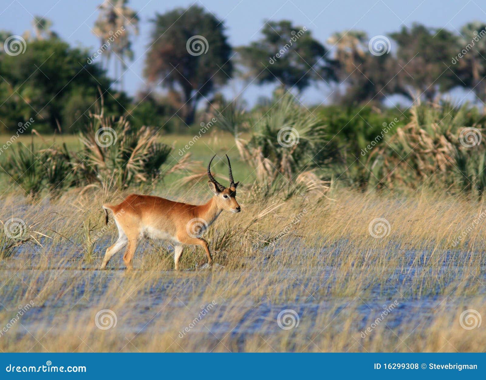 Okavango перепада