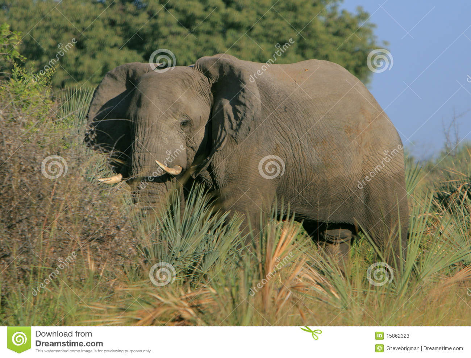 Okavango слона