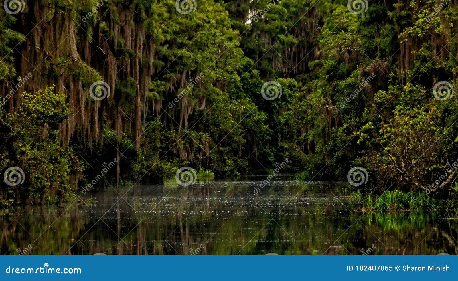 Okefenokee Stillness of the Swamp
