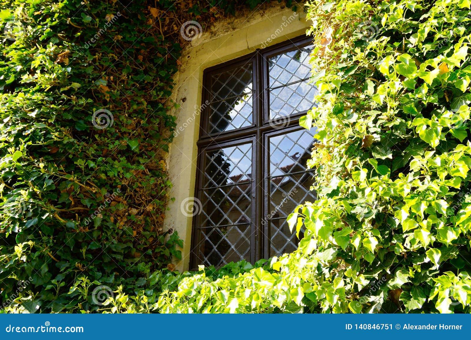 Okno na ścianie przerastającej z bluszczem