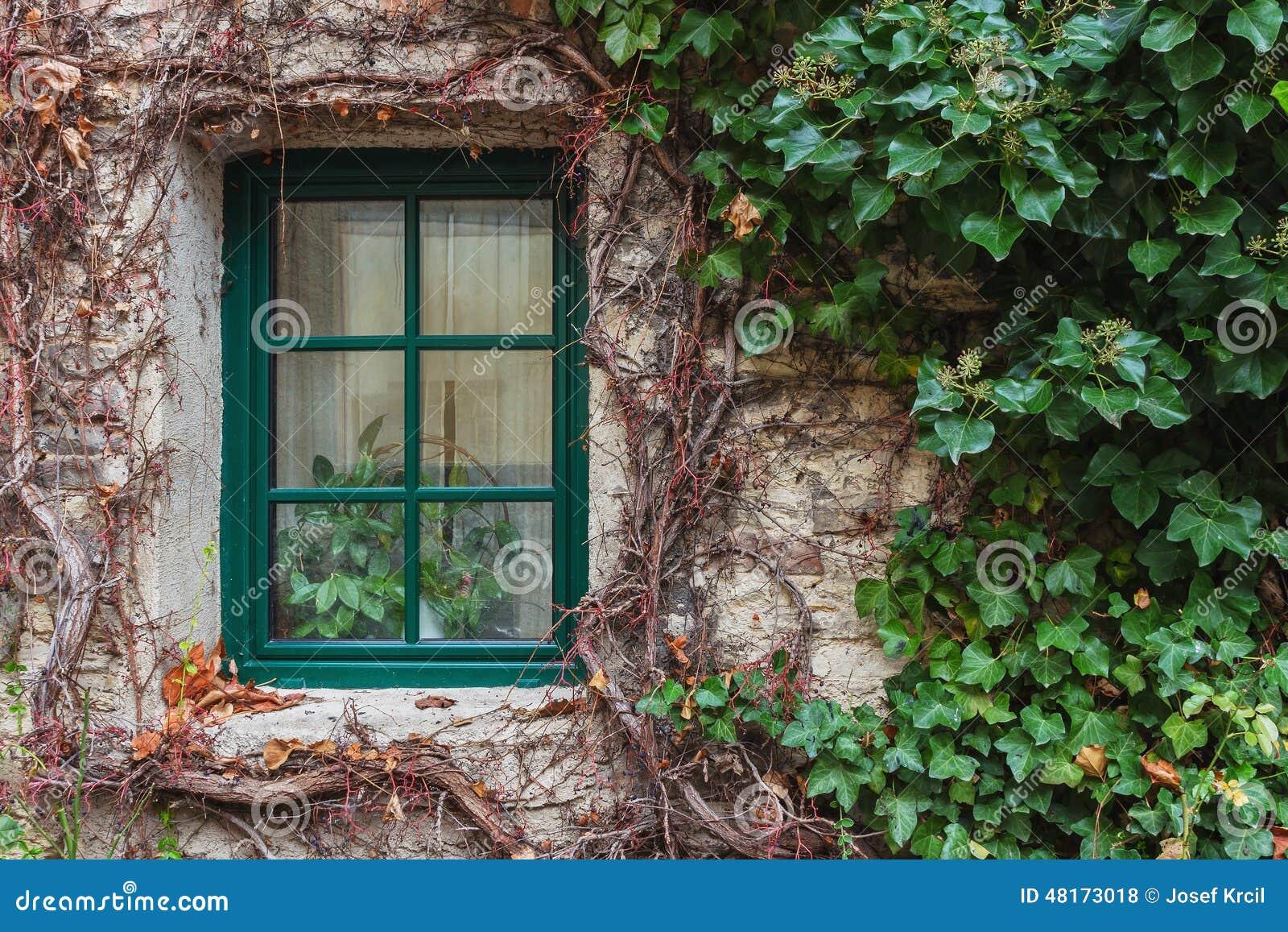 Okno przerastający z bluszczem