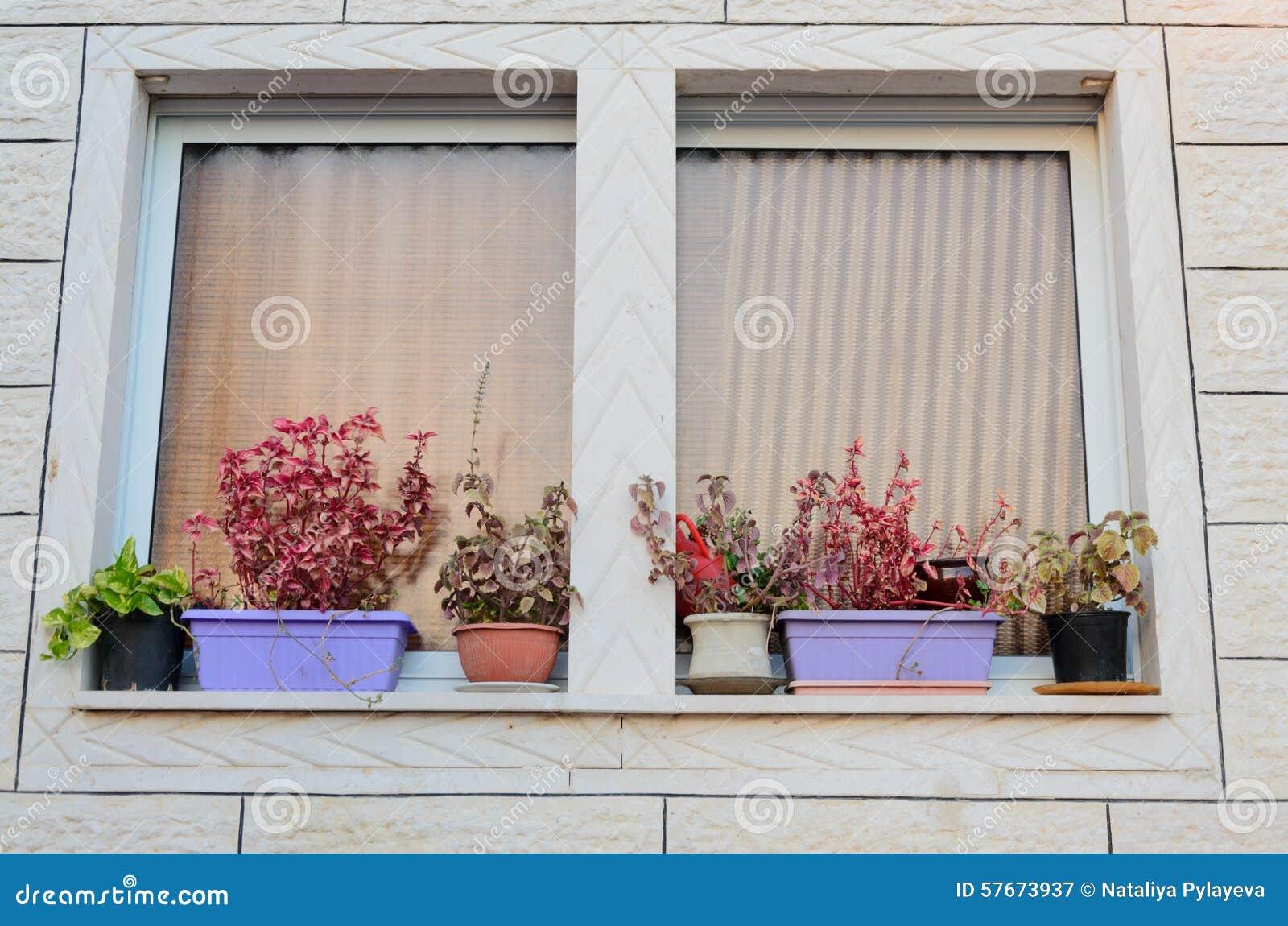Okno z zasłonami i kwiatów garnkami na windowsill na zewnątrz nowego domu