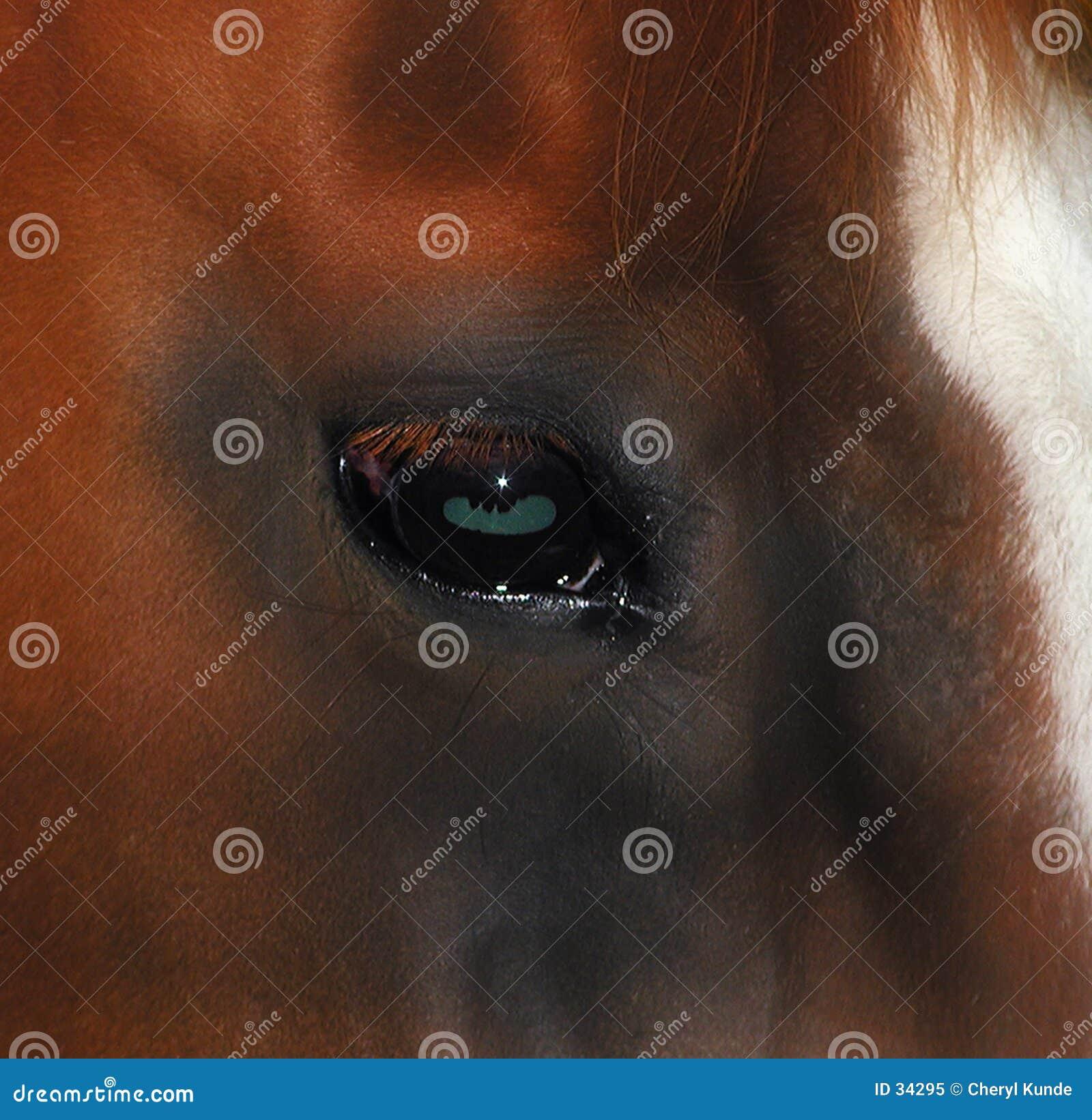 Download Oko koni obraz stock. Obraz złożonej z czerwień, zaciszność - 34295