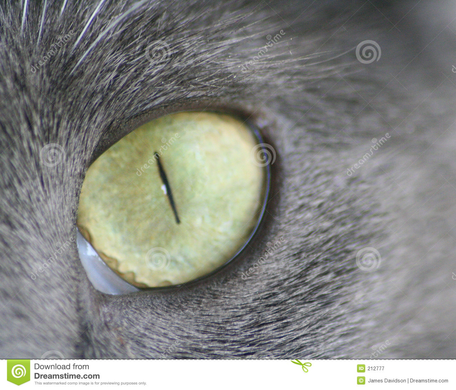 Oko kota wielki strzał makro