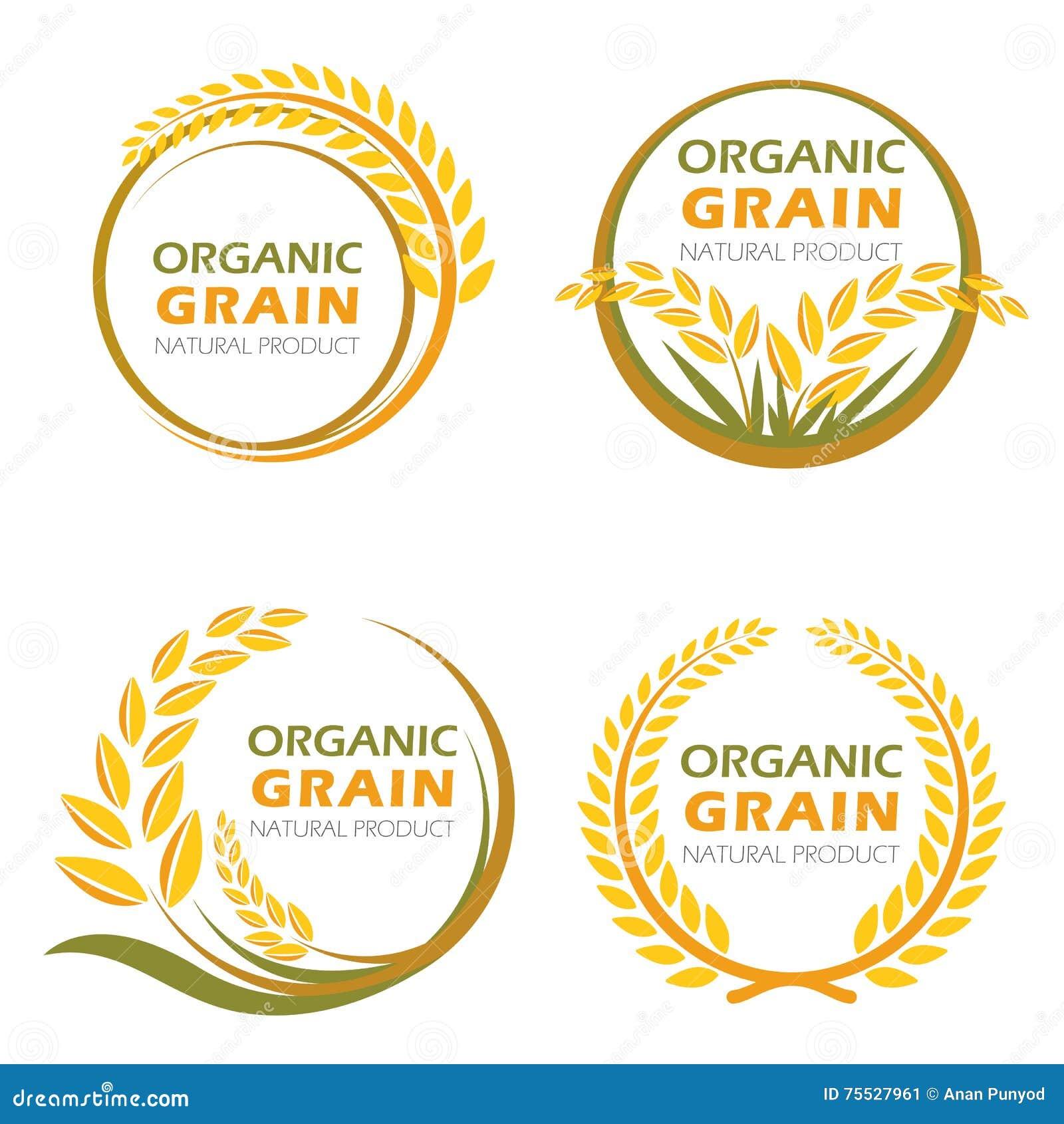 Okrąża irlandczyków ryż organicznie zbożowych produkty i zdrowego karmowego wektorowego projekt