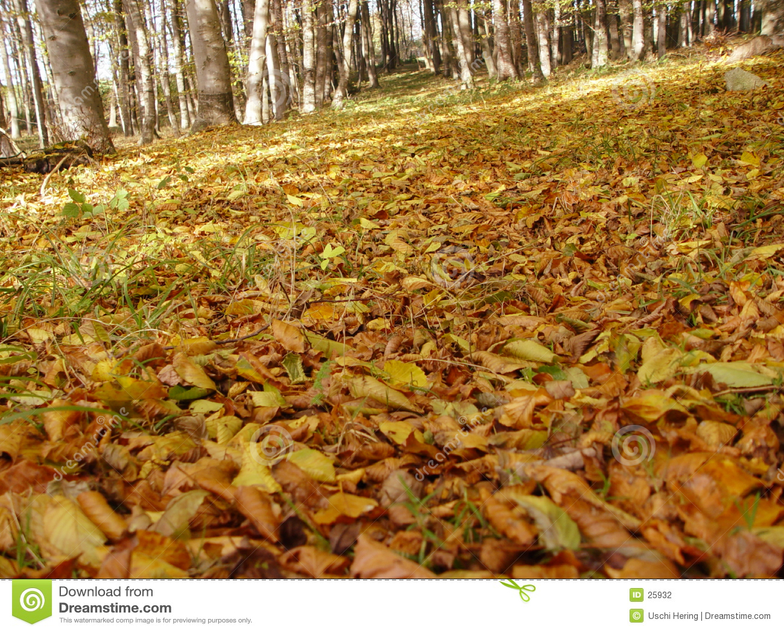 Oktober bos