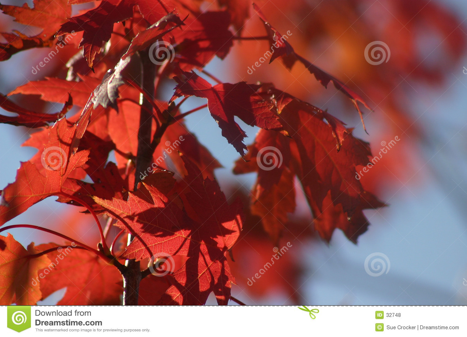 Oktober-Rot-Blätter