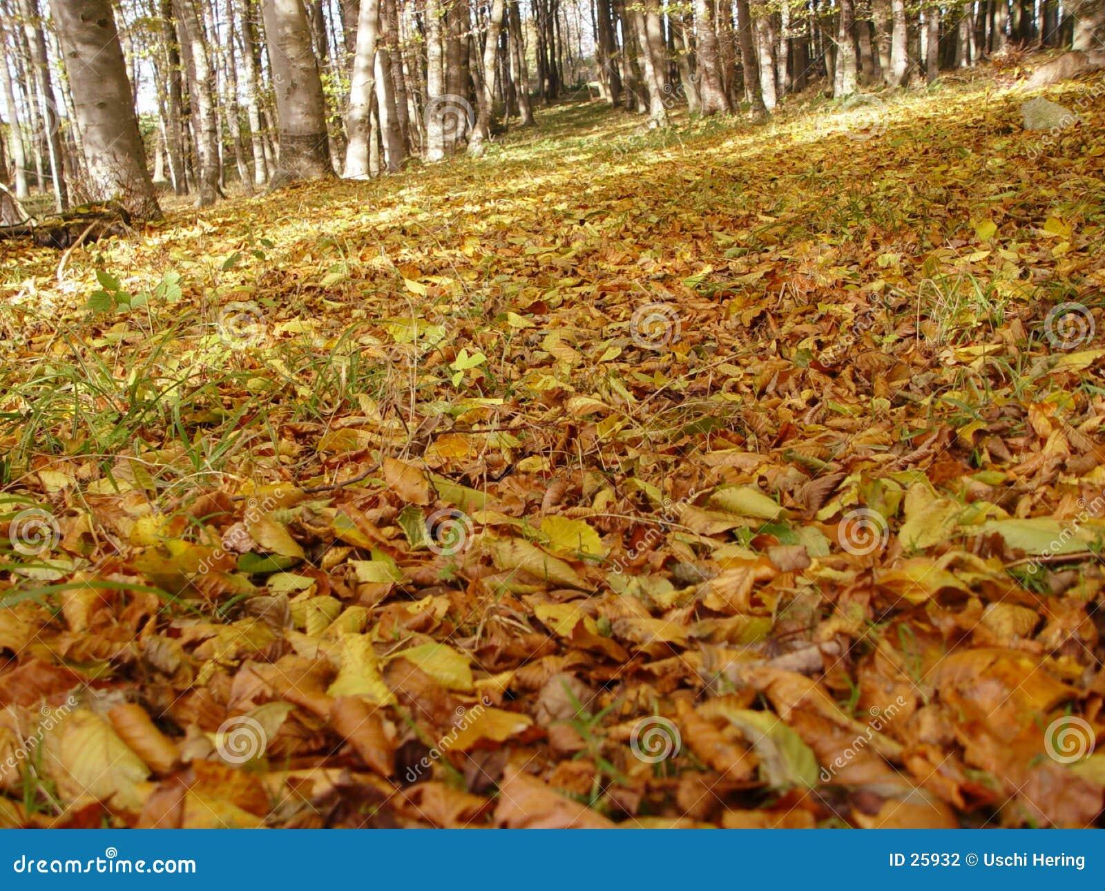 Oktober-Wald