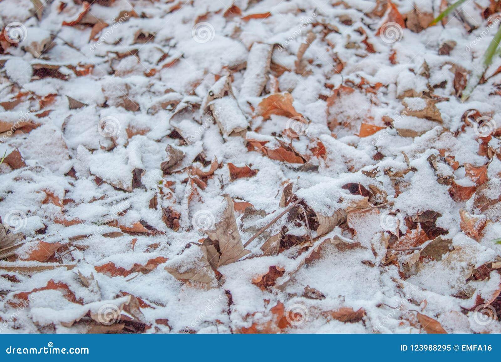 Okurzanie śnieg na Jesiennych liściach