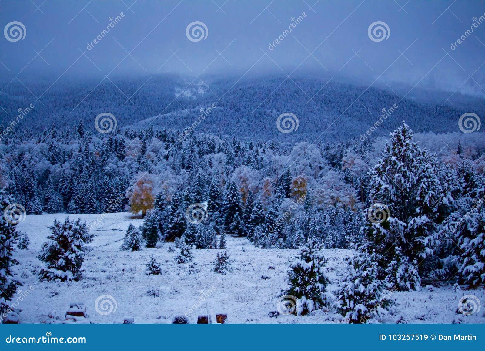 Okurzanie śnieg na sosnach i osikach sezon
