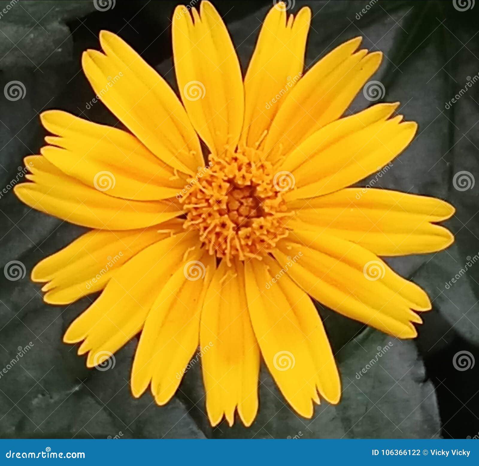 Olá! flor 1Natural