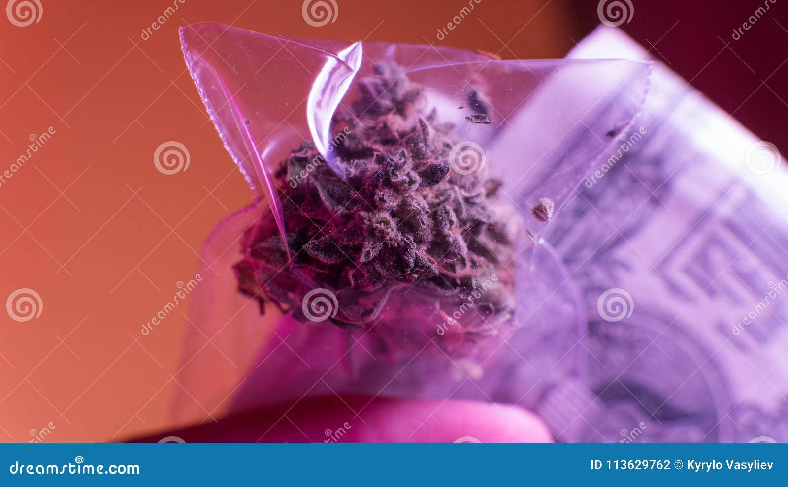 Olaglig marijuanaförsäljning i Europa och Ryssland nPlans för legalisering för 2018