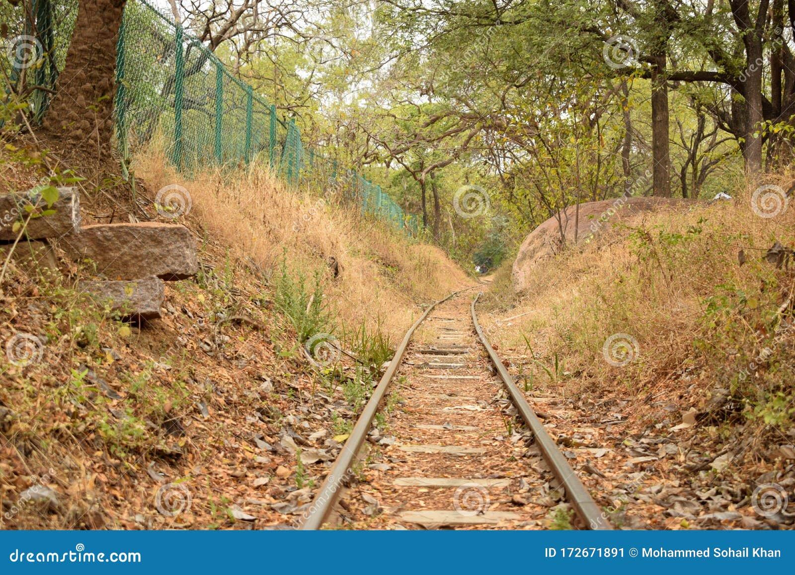 Abandoned Railroad Tracks stock image. Image of season
