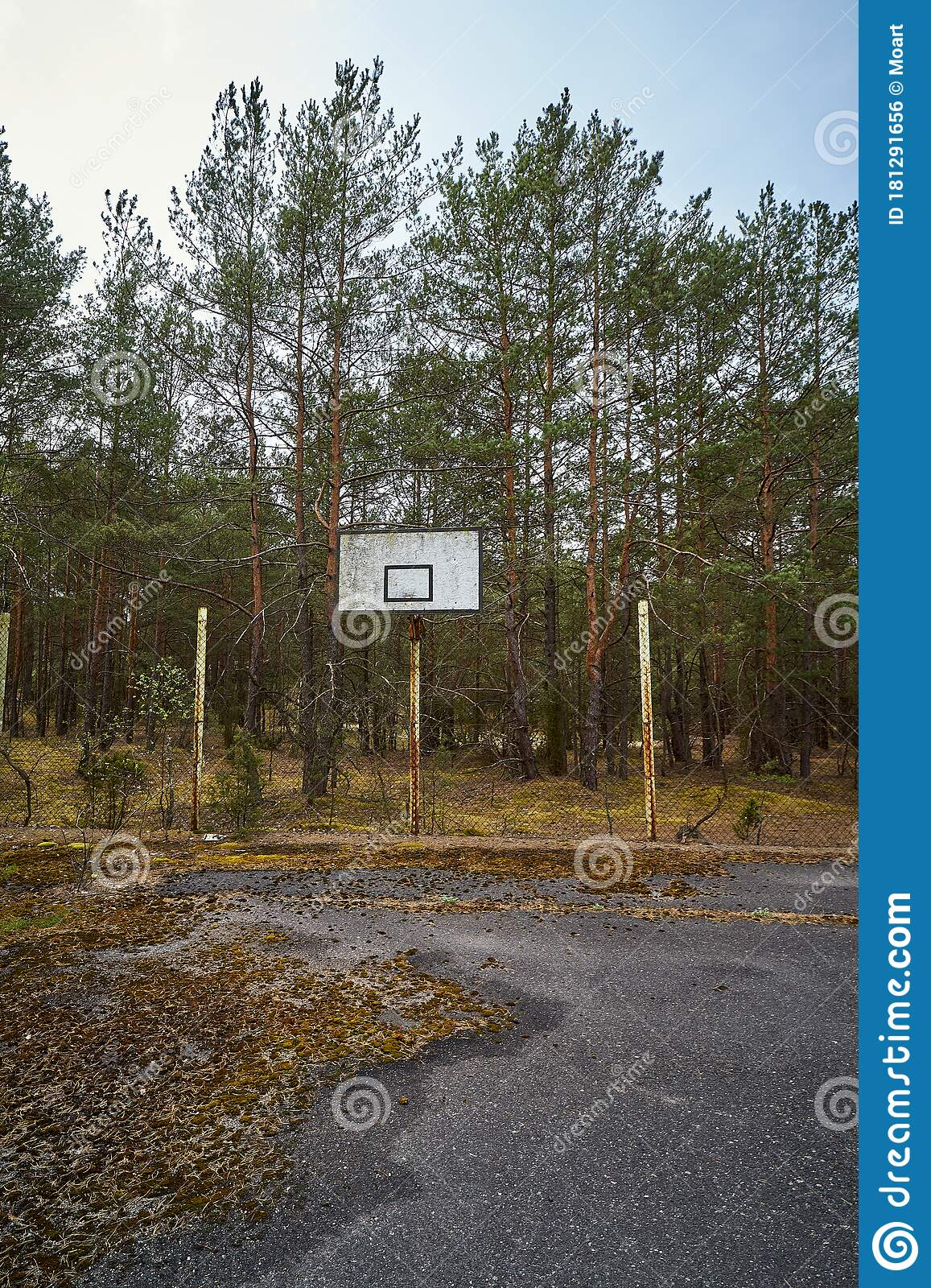 Old Abandoned Asphalt Playground In The Spring Forest Stock Photo Image Of Court Countryside 181291656