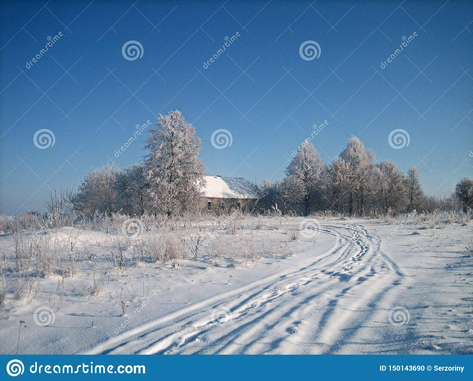 Old abandoned wooden house in a thicket of trees in a snowy field in cold winter day