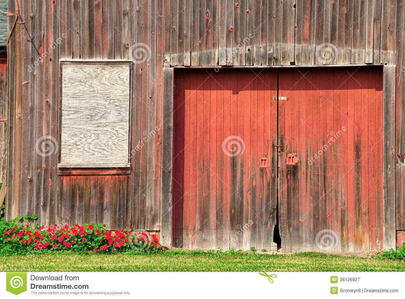 Old Barn Door Stock Image Image Of Horizontal Petunias 36126927