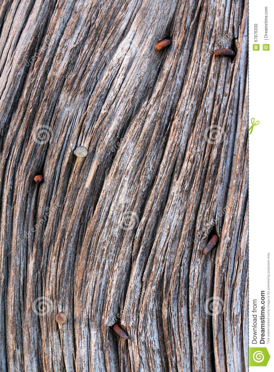 Old Barn Wood With Rusty Nails Stock Photo Image Of