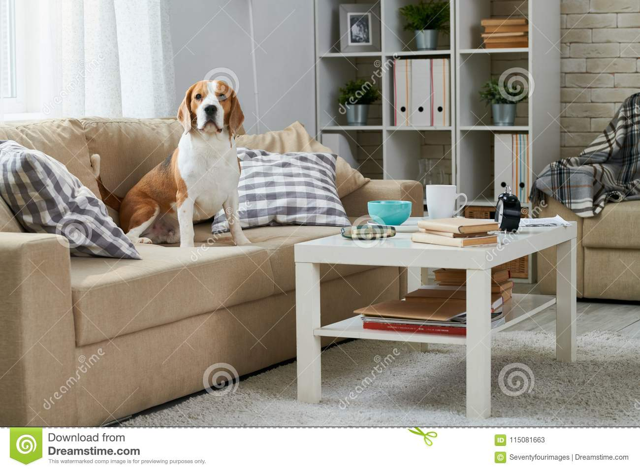 Brilliant Old Beagle Sitting On Sofa Stock Image Image Of Couch Ncnpc Chair Design For Home Ncnpcorg