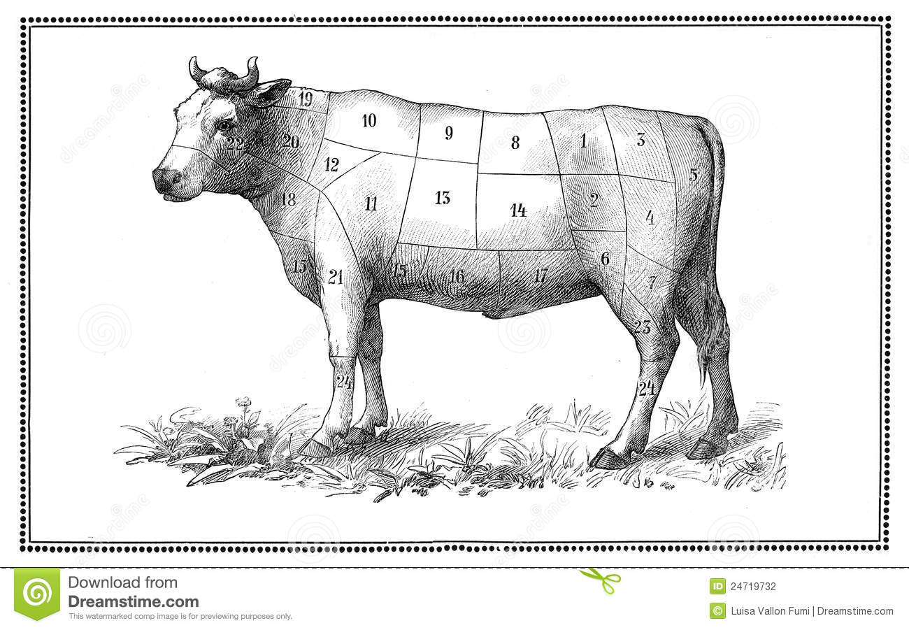 Old Beef Chart Stock Illustration  Illustration Of Hloin