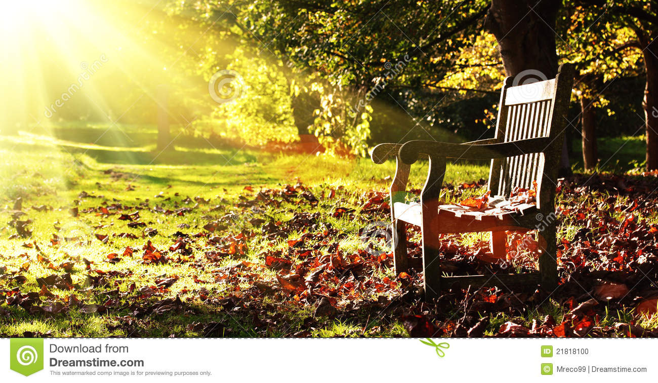 Old Bench With Autumn Leaves And Morning Sunlight Stock ...