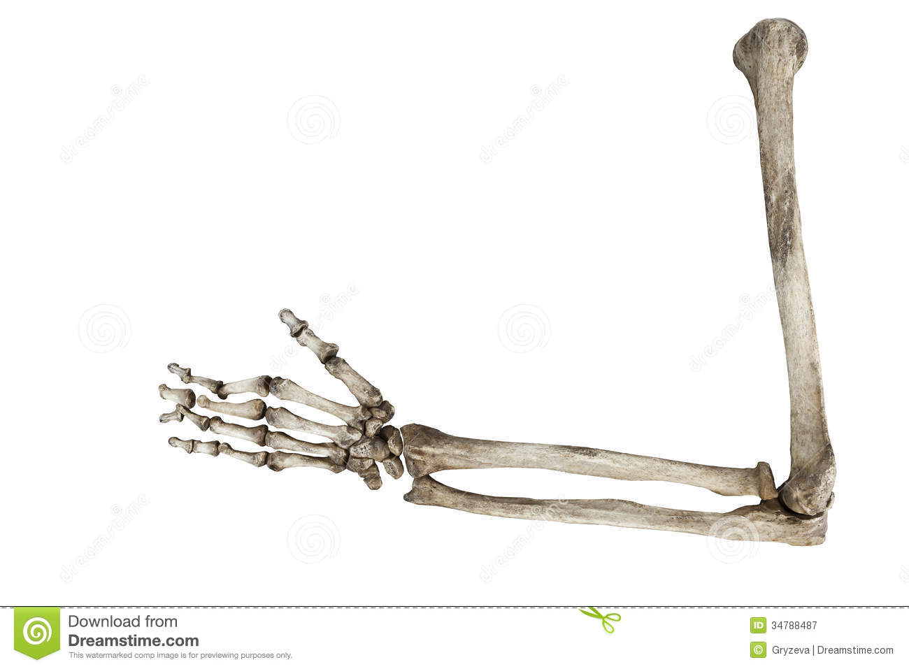http://thumbs.dreamstime.com/z/old-bones-human-hand-isolated-white ...