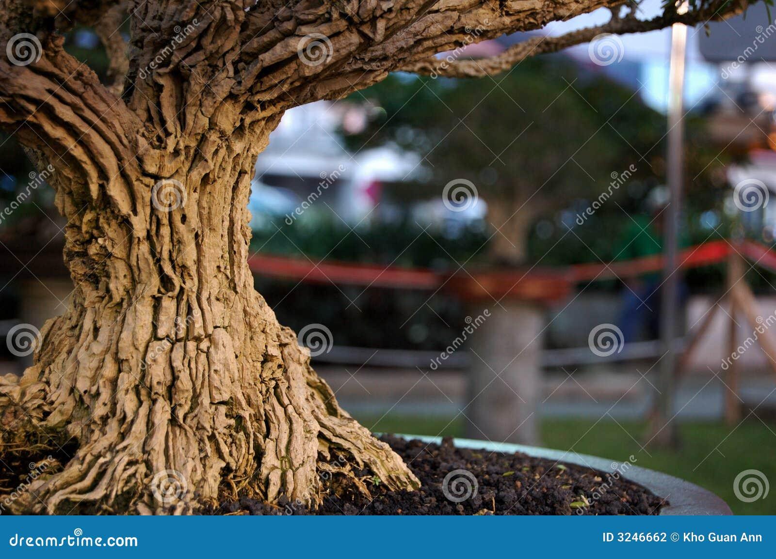 Old Bonsai Bark
