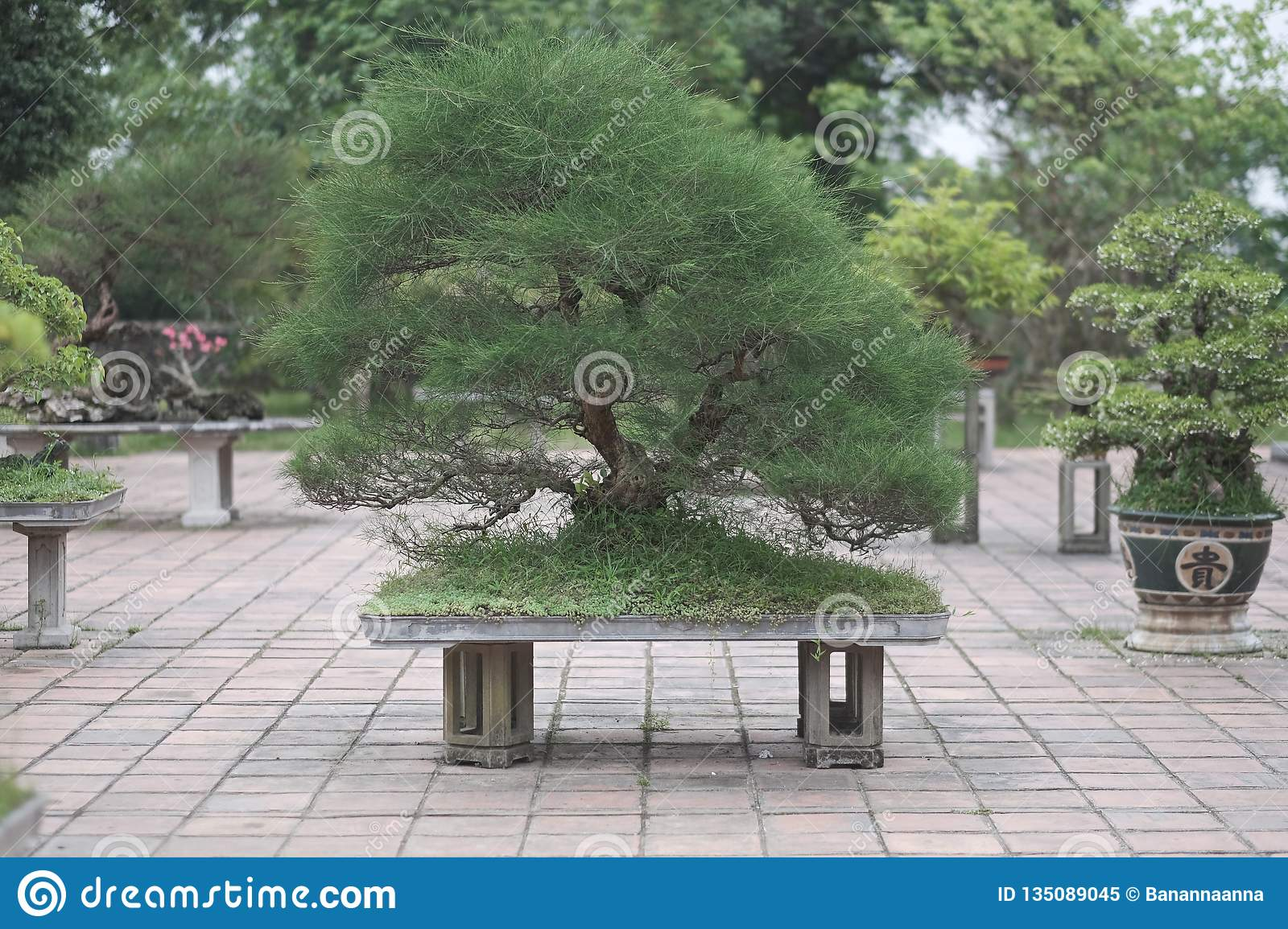 Old Bonsai Trees In Vases Stock Image Image Of Plant 135089045
