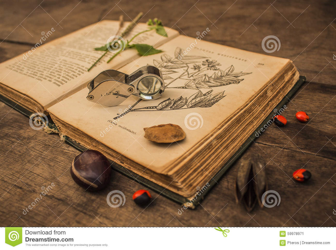 Old botanical book