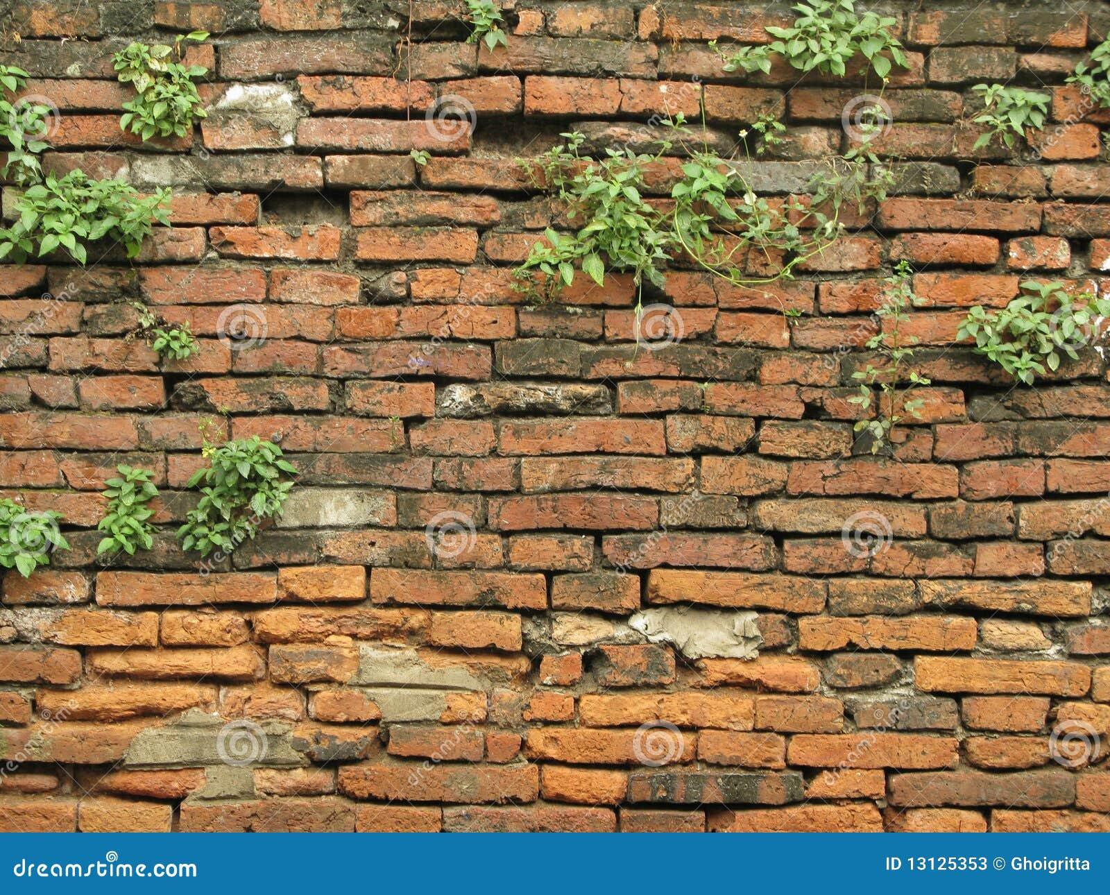 Old Brick Wall Stock Photos Image 13125353