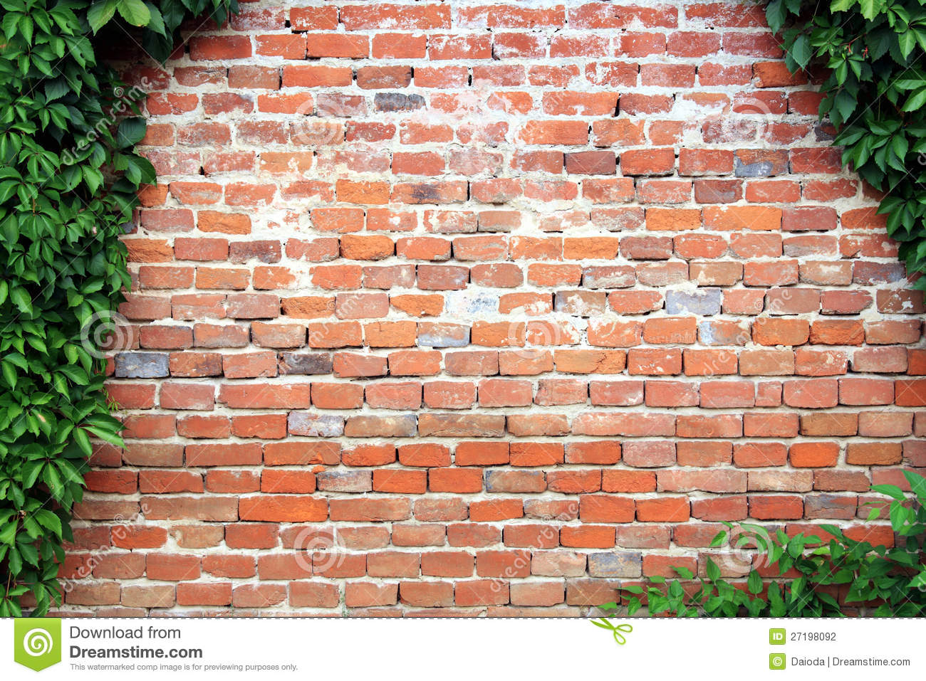 Old Brick Wall With An Ivy Frame Copy Space Stock