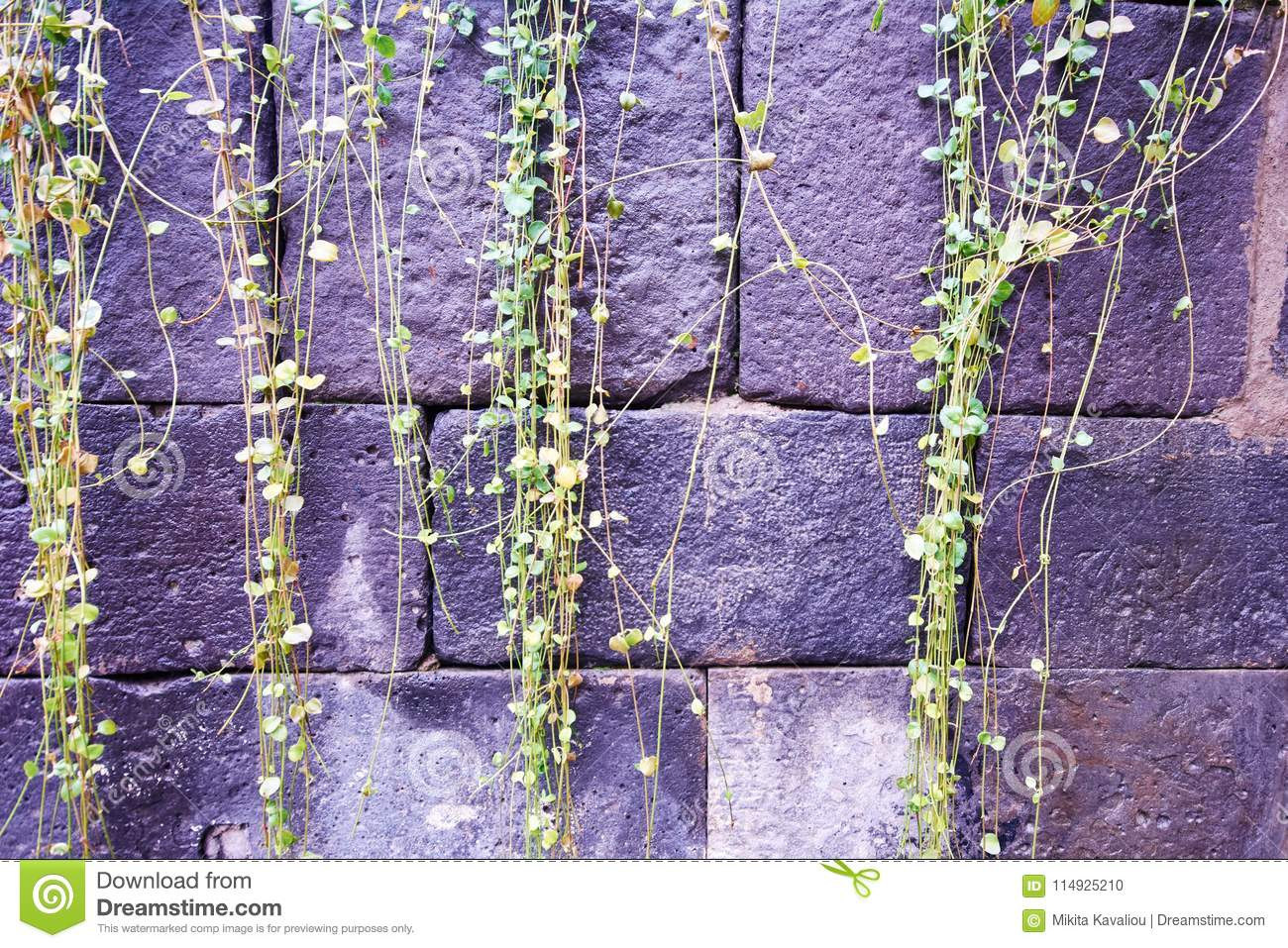 The Old Brick Wall Overgrown Stock Photo Image Of Growth Design