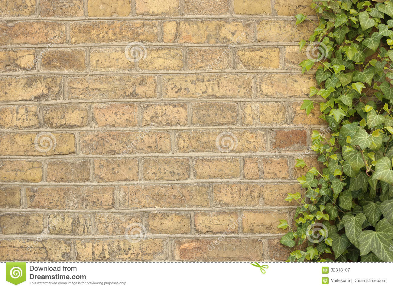 Old Bricks Wall With Creeper. Stock Image - Image of concept, empty ...