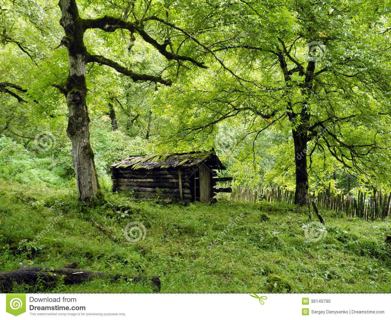 the old cabin in the woods stock photo image 36140790. Black Bedroom Furniture Sets. Home Design Ideas