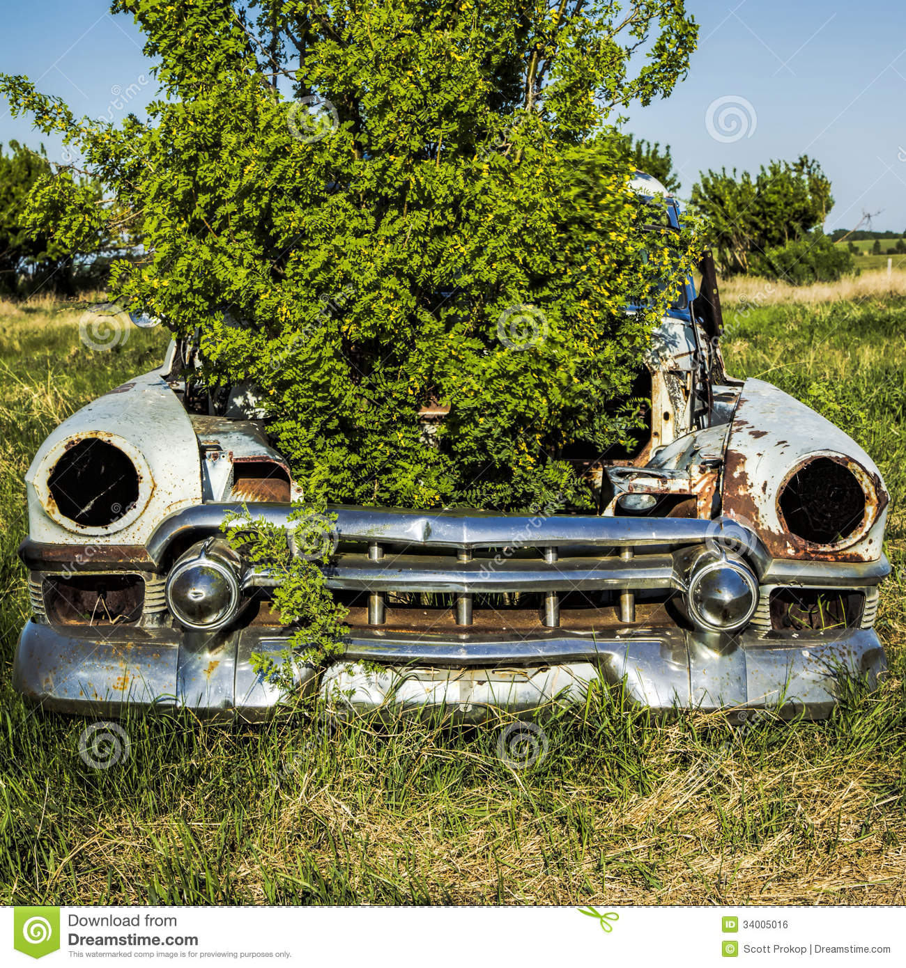 Old Car With Plant In The Hood Stock Photo - Image of vintage ...