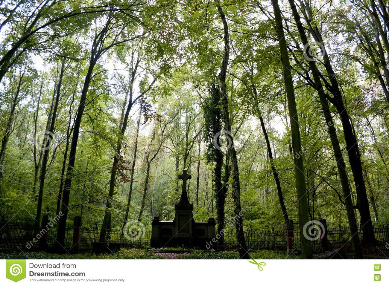 cemetery in the forest - photo #29