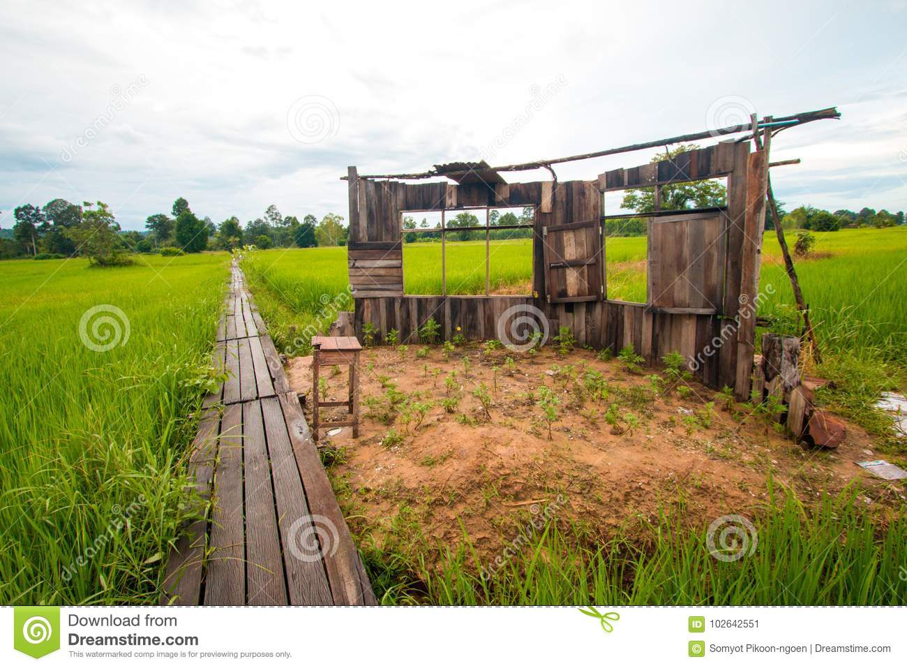 Old Classroom In The Green Rice Field Stock Image